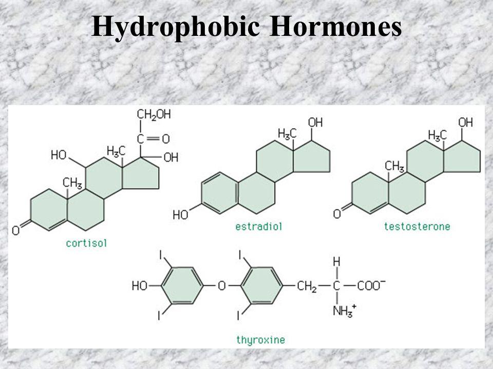 Hydrophobic Hormones