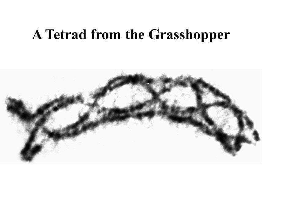 A Tetrad from the Grasshopper