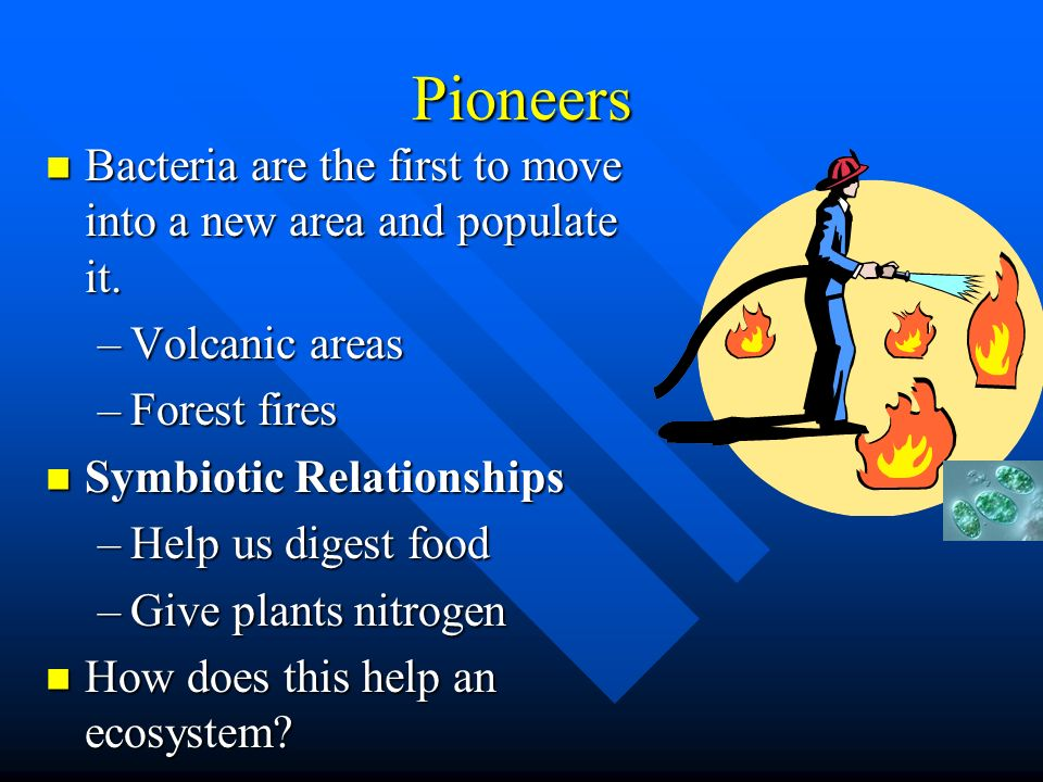 Pioneers Bacteria are the first to move into a new area and populate it. Bacteria are the first to move into a new area and populate it. –Volcanic are
