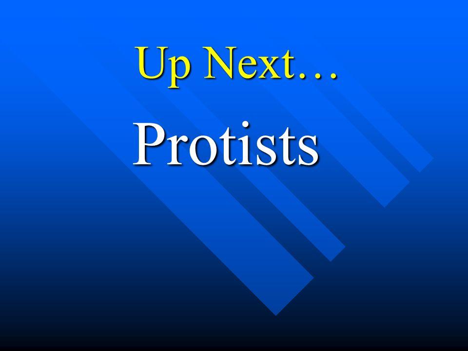Up Next… Protists