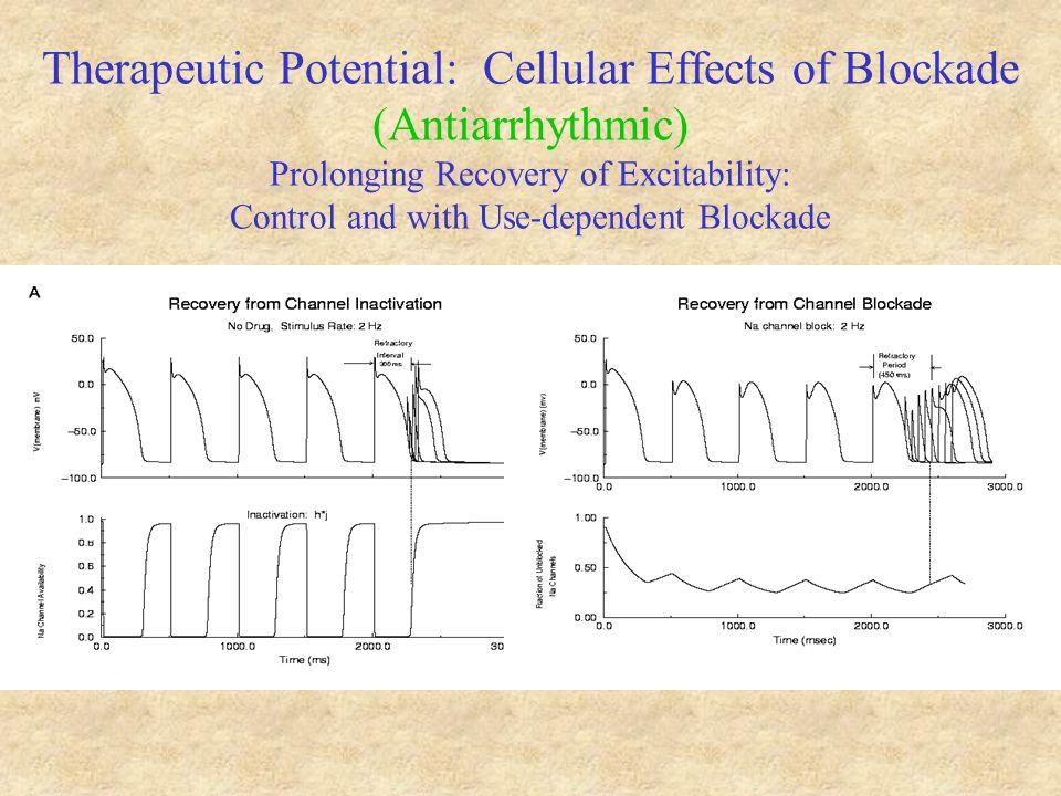 Therapeutic Potential: Cellular Effects of Blockade (Antiarrhythmic) Prolonging Recovery of Excitability: Control and with Use-dependent Blockade