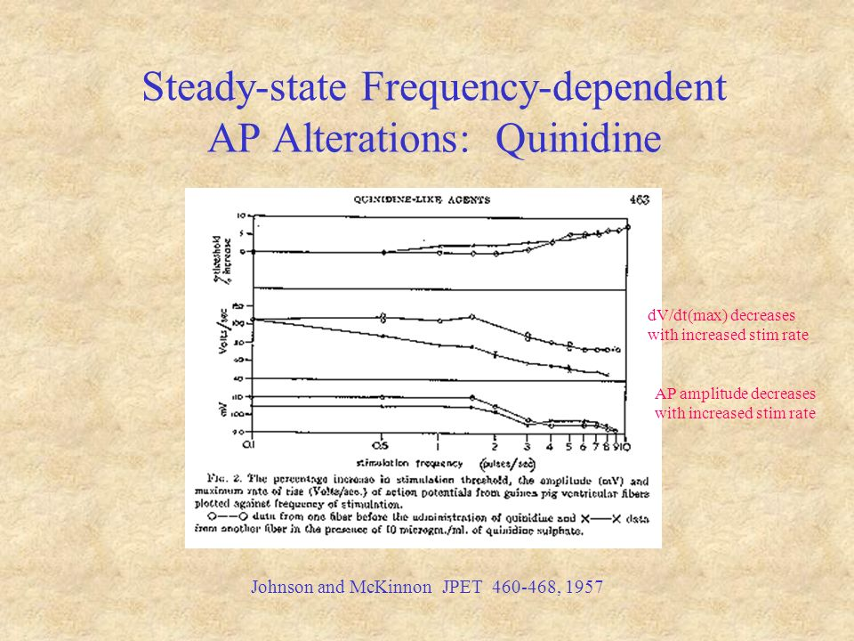 Steady-state Frequency-dependent AP Alterations: Quinidine Johnson and McKinnon JPET 460-468, 1957 dV/dt(max) decreases with increased stim rate AP amplitude decreases with increased stim rate