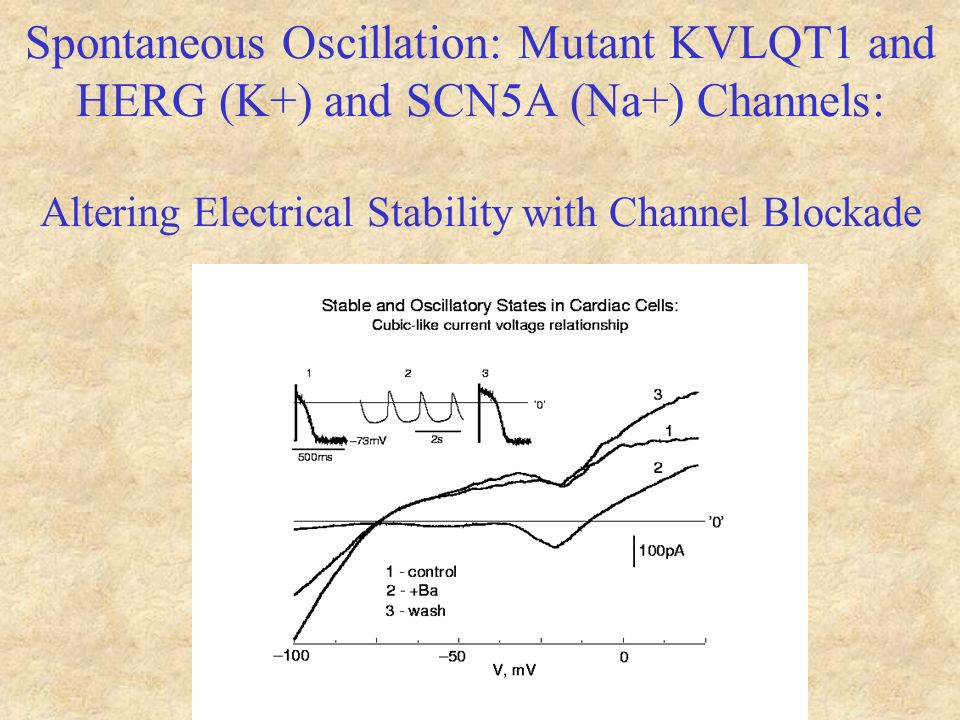 Spontaneous Oscillation: Mutant KVLQT1 and HERG (K+) and SCN5A (Na+) Channels: Altering Electrical Stability with Channel Blockade