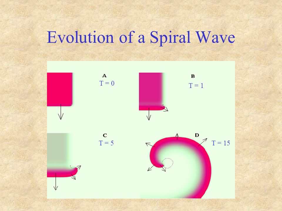 Evolution of a Spiral Wave T = 0 T = 1 T = 5T = 15