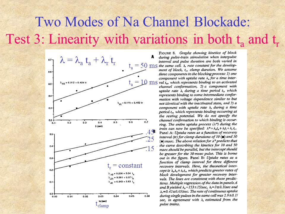 Two Modes of Na Channel Blockade: Test 3: Linearity with variations in both t a and t r t a = 50 ms t a = 10 ms t r = constant = a t a + r t r t clamp.15.25.45