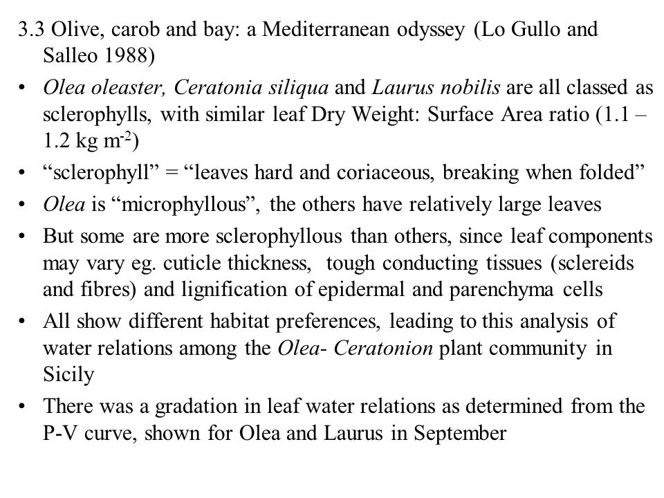 3.3 Olive, carob and bay: a Mediterranean odyssey (Lo Gullo and Salleo 1988) Olea oleaster, Ceratonia siliqua and Laurus nobilis are all classed as sc