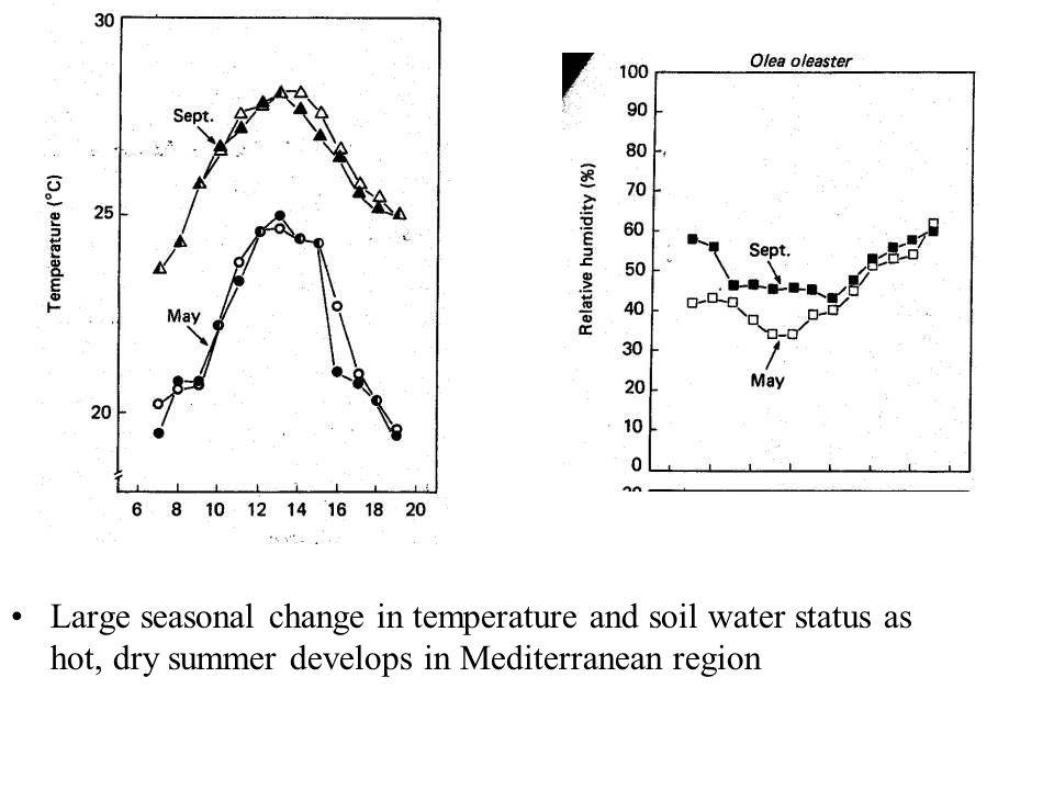 Large seasonal change in temperature and soil water status as hot, dry summer develops in Mediterranean region