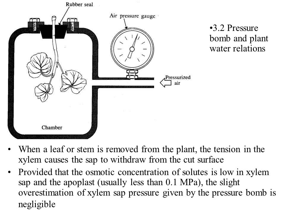 3.2.1 The pressure-volume curve Methodology: first catch your shrub, stem or leaf preferably somewhere in the Mediterranean basin Place stem or leaf overnight in a beaker of water in a dark cupboard, covered with a plastic bag, to allow complete rehydration to full turgor Method 1: invert stem in pressure bomb, pressurise to reach balance point, invert pre-weighed tube containing absorbent material over petiole, apply over-pressure of 0.2 to 0.5 MPa for 5-10 minutes; depressurise, weigh tube, re-measure new balance point; repeat procedure for 10 data points through point of turgor loss Method 2 : weigh stem/leaf, measure initial balance point, remove, put branch on bench and leave to dehydrate for 10-20 mins (repeat for replicate 2 and 3); reweigh, re-measure balance point, repeat…… Tabulate data as and Relative water content and plot as 1/ against RWC…….