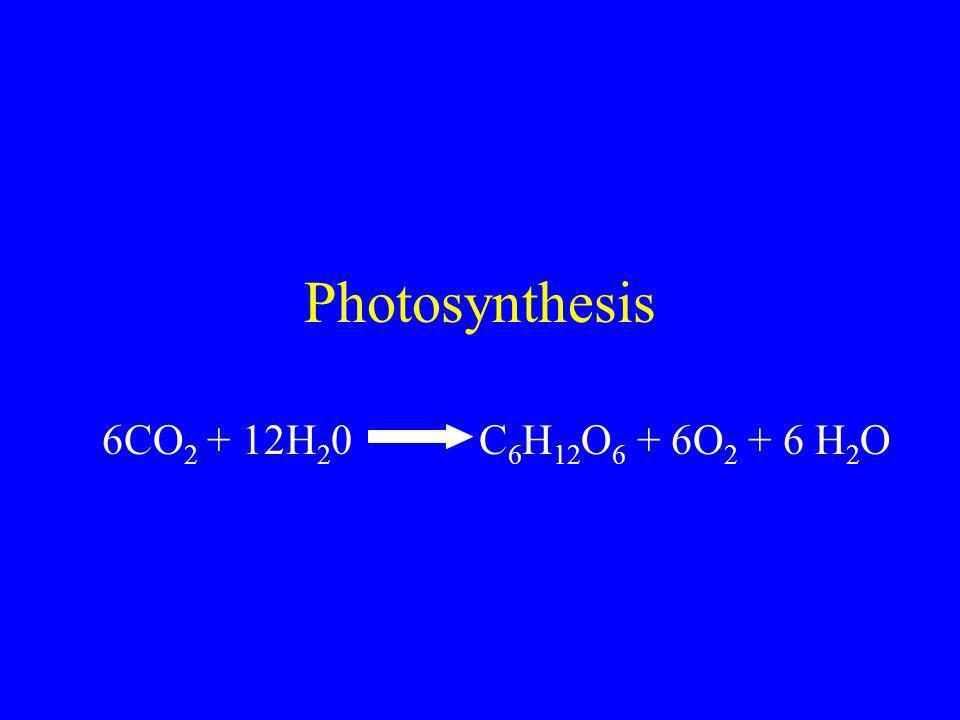 Photosynthesis 6CO 2 + 12H 2 0 C 6 H 12 O 6 + 6O 2 + 6 H 2 O