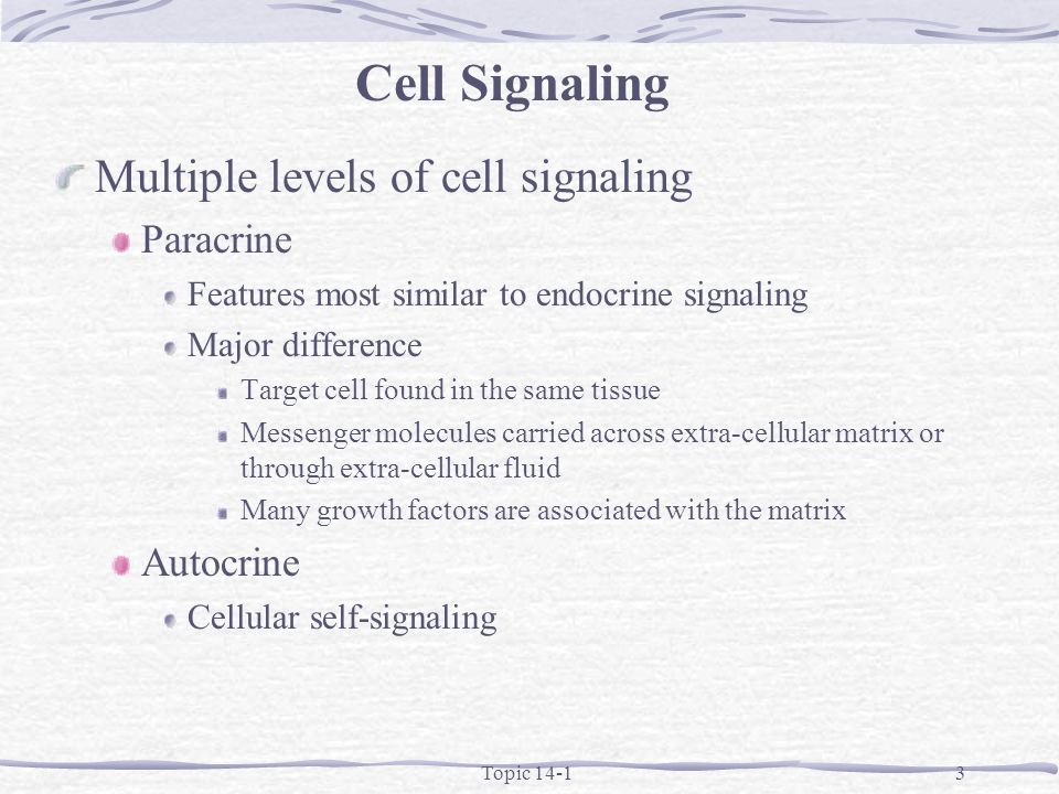 Topic 14-13 Multiple levels of cell signaling Paracrine Features most similar to endocrine signaling Major difference Target cell found in the same tissue Messenger molecules carried across extra-cellular matrix or through extra-cellular fluid Many growth factors are associated with the matrix Autocrine Cellular self-signaling Cell Signaling