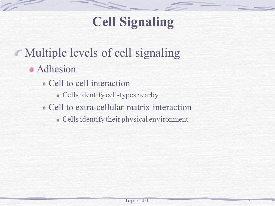 Topic 14-15 Multiple levels of cell signaling Adhesion Cell to cell interaction Cells identify cell-types nearby Cell to extra-cellular matrix interaction Cells identify their physical environment Cell Signaling