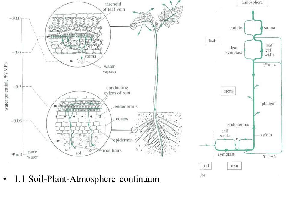 1.1 Soil-Plant-Atmosphere continuum