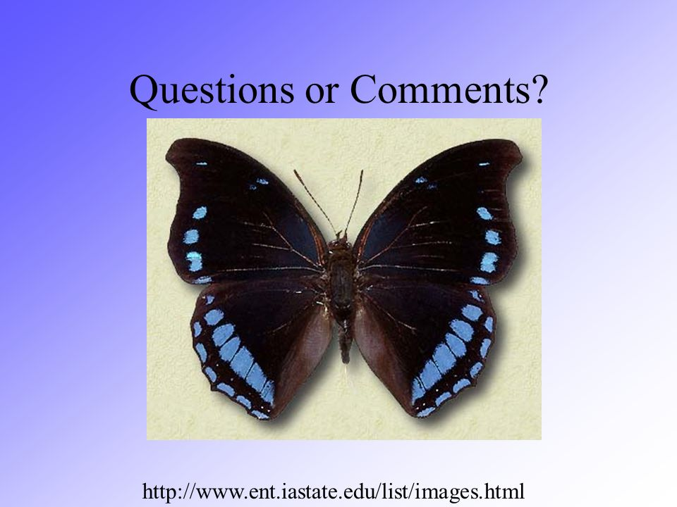Questions or Comments? http://www.ent.iastate.edu/list/images.html