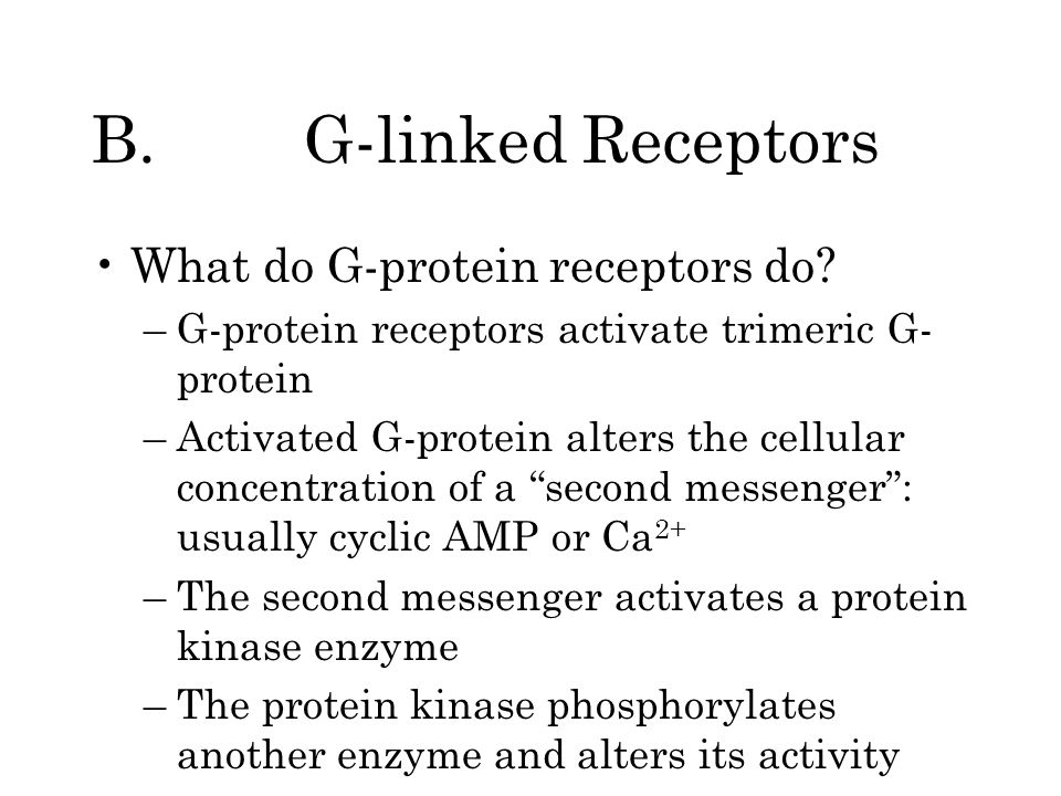 B.G-linked Receptors What do G-protein receptors do? –G-protein receptors activate trimeric G- protein –Activated G-protein alters the cellular concen