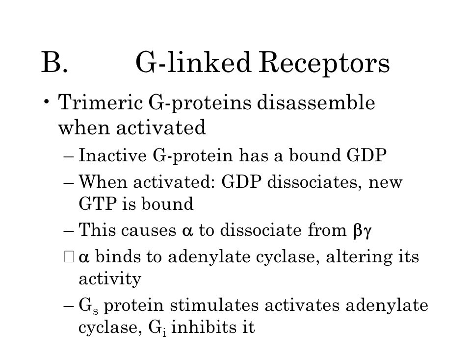 B.G-linked Receptors Trimeric G-proteins disassemble when activated –Inactive G-protein has a bound GDP –When activated: GDP dissociates, new GTP is bound –This causes to dissociate from – binds to adenylate cyclase, altering its activity –G s protein stimulates activates adenylate cyclase, G i inhibits it