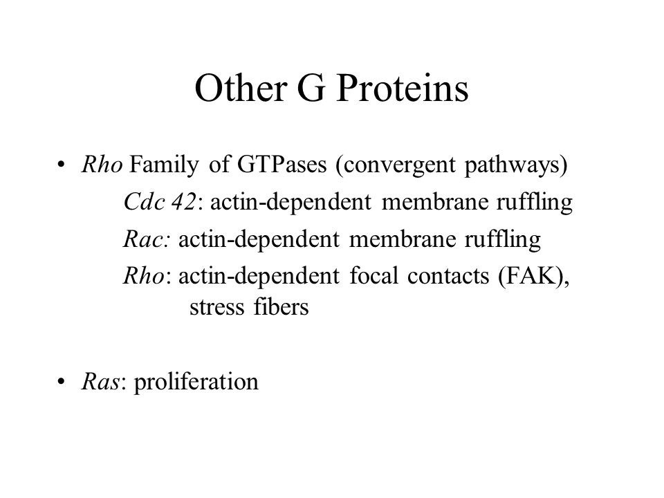 Other G Proteins Rho Family of GTPases (convergent pathways) Cdc 42: actin-dependent membrane ruffling Rac: actin-dependent membrane ruffling Rho: act