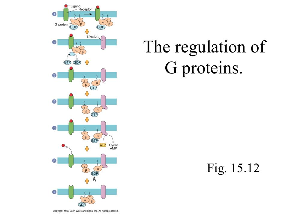 The regulation of G proteins. Fig. 15.12