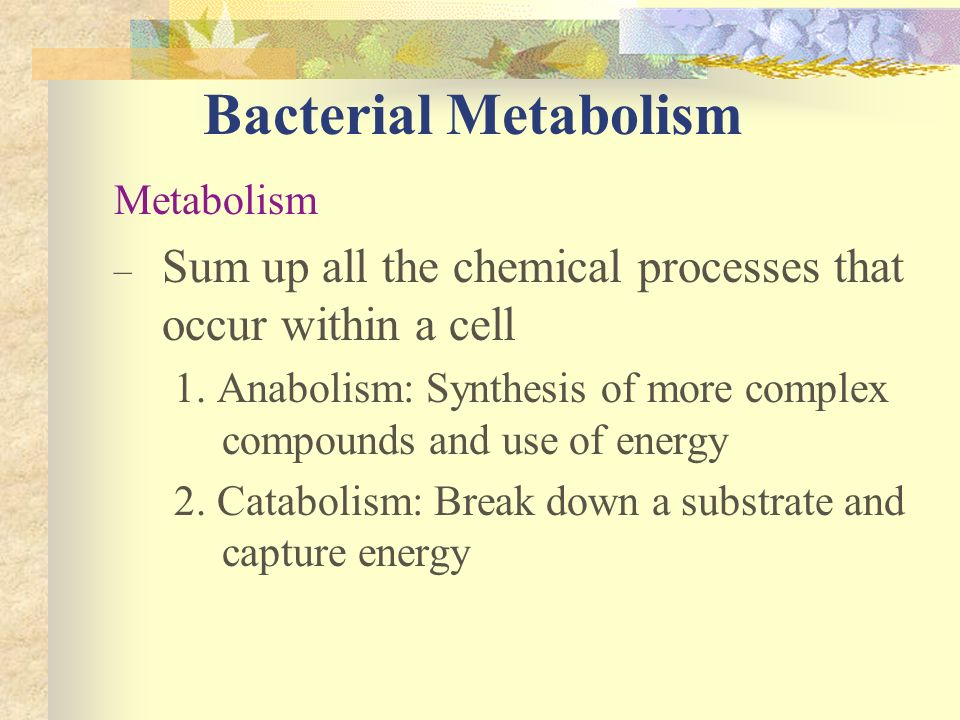 Bacterial Metabolism Metabolism – Sum up all the chemical processes that occur within a cell 1. Anabolism: Synthesis of more complex compounds and use