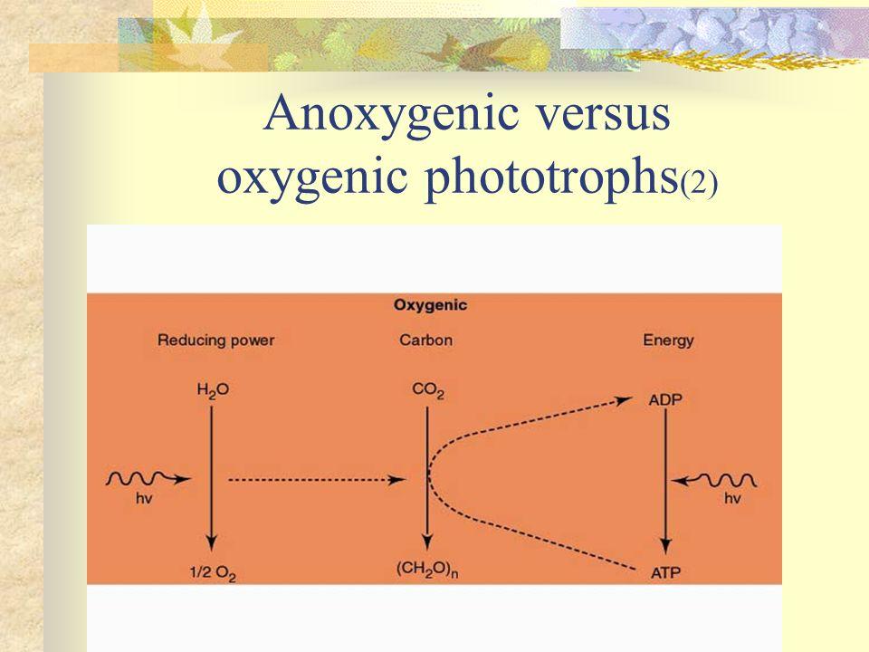 Anoxygenic versus oxygenic phototrophs (2)