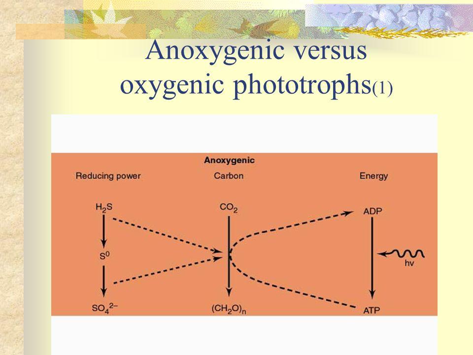 Anoxygenic versus oxygenic phototrophs (1)