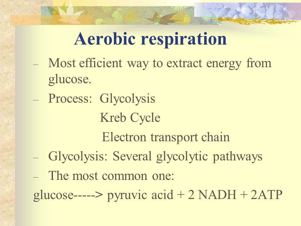 Aerobic respiration – Most efficient way to extract energy from glucose. – Process: Glycolysis Kreb Cycle Electron transport chain – Glycolysis: Sever