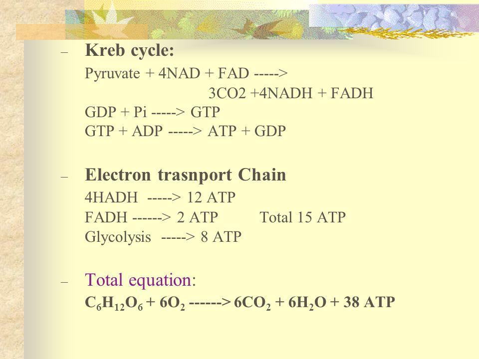 – Kreb cycle: Pyruvate + 4NAD + FAD -----> 3CO2 +4NADH + FADH GDP + Pi -----> GTP GTP + ADP -----> ATP + GDP – Electron trasnport Chain 4HADH -----> 1