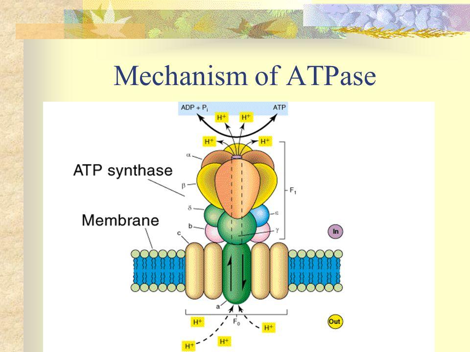 Mechanism of ATPase