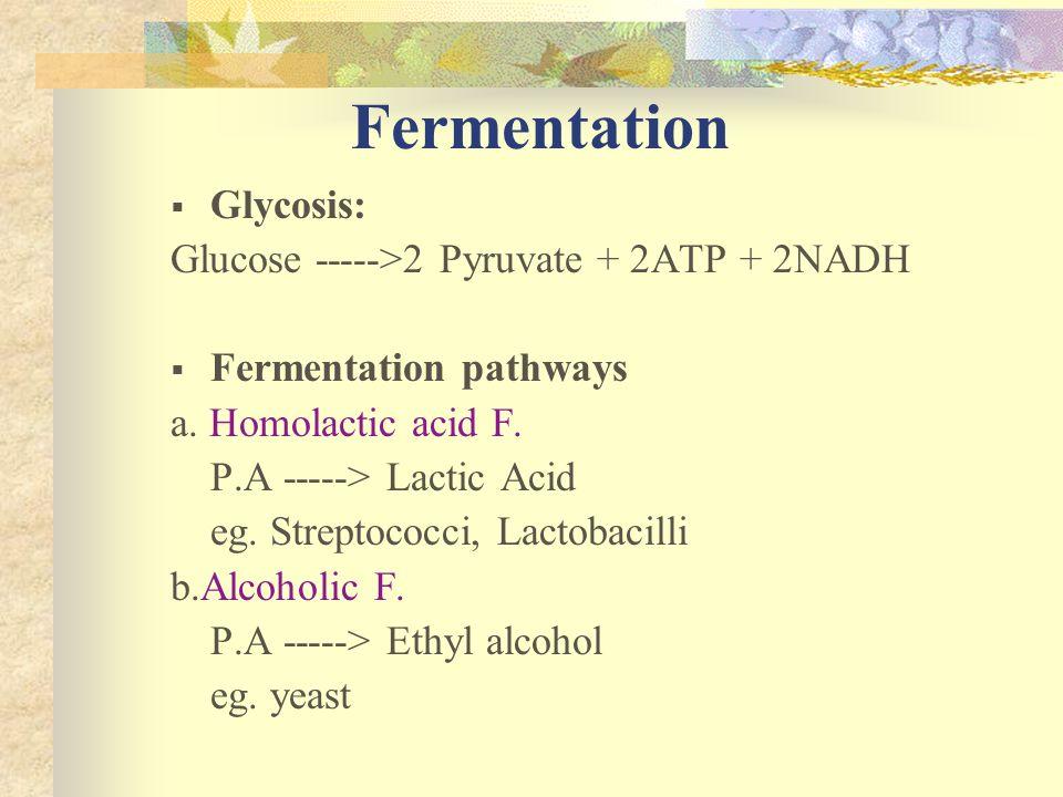 Fermentation Glycosis: Glucose ----->2 Pyruvate + 2ATP + 2NADH Fermentation pathways a. Homolactic acid F. P.A -----> Lactic Acid eg. Streptococci, La