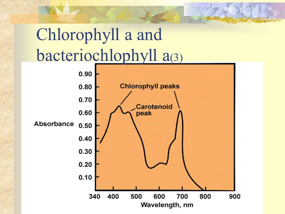 Chlorophyll a and bacteriochlophyll a (3)