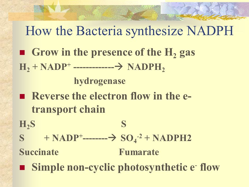 How the Bacteria synthesize NADPH Grow in the presence of the H 2 gas H 2 + NADP + ------------- NADPH 2 hydrogenase Reverse the electron flow in the