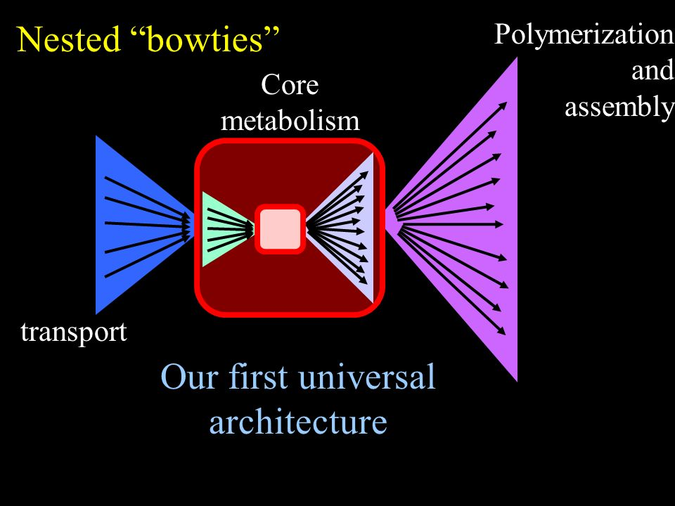 Polymerization and assembly transport Core metabolism Nested bowties Our first universal architecture