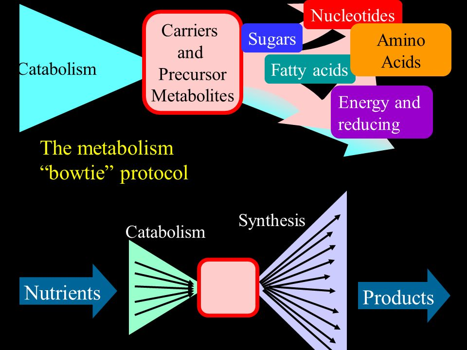 Catabolism Carriers and Precursor Metabolites The metabolism bowtie protocol Energy and reducing Fatty acids Sugars Nucleotides Amino Acids Nutrients Products Catabolism Synthesis