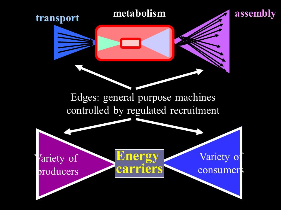 Variety of consumers Variety of producers Energy carriers transport assemblymetabolism Edges: general purpose machines controlled by regulated recruitment