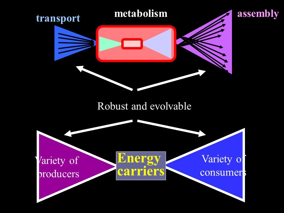Variety of consumers Variety of producers Energy carriers transport assemblymetabolism Robust and evolvable