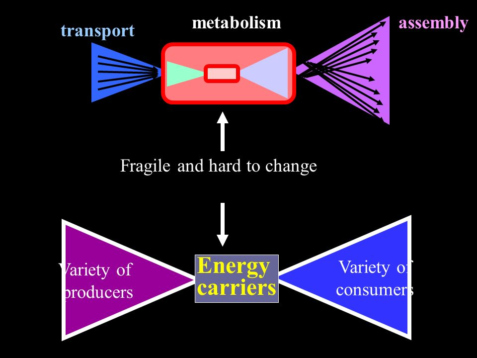 Variety of consumers Variety of producers Energy carriers transport assemblymetabolism Fragile and hard to change