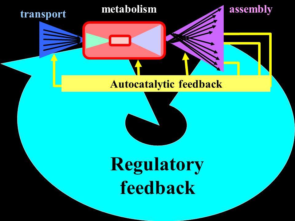 Autocatalytic feedback Regulatory feedback transport assemblymetabolism