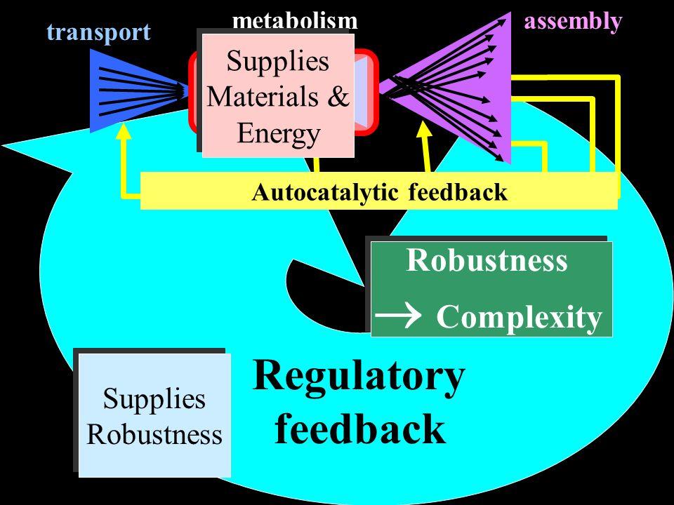 Autocatalytic feedback Regulatory feedback transport assemblymetabolism Supplies Materials & Energy Supplies Materials & Energy Supplies Robustness Su