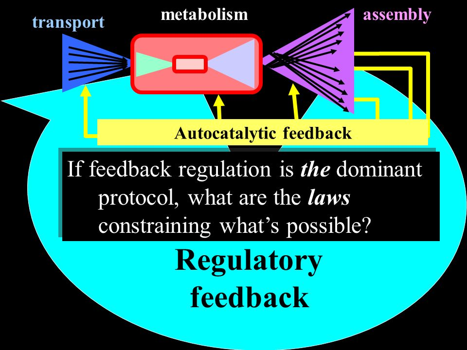 Autocatalytic feedback Regulatory feedback transport assemblymetabolism If feedback regulation is the dominant protocol, what are the laws constraining whats possible?
