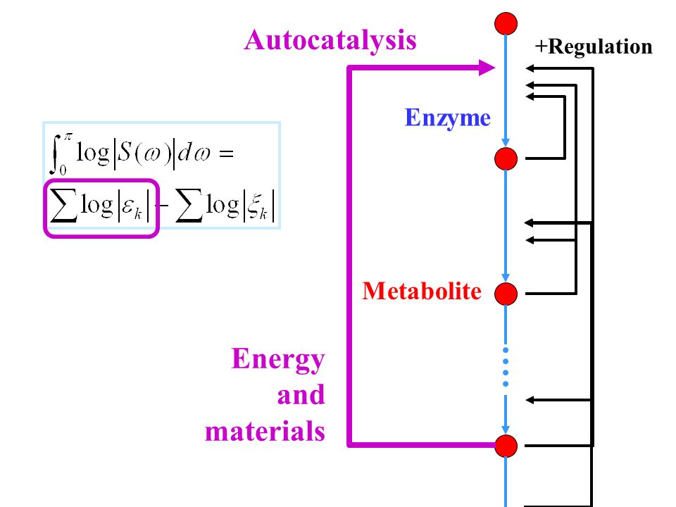 Metabolite Enzyme +Regulation Autocatalysis Energy and materials