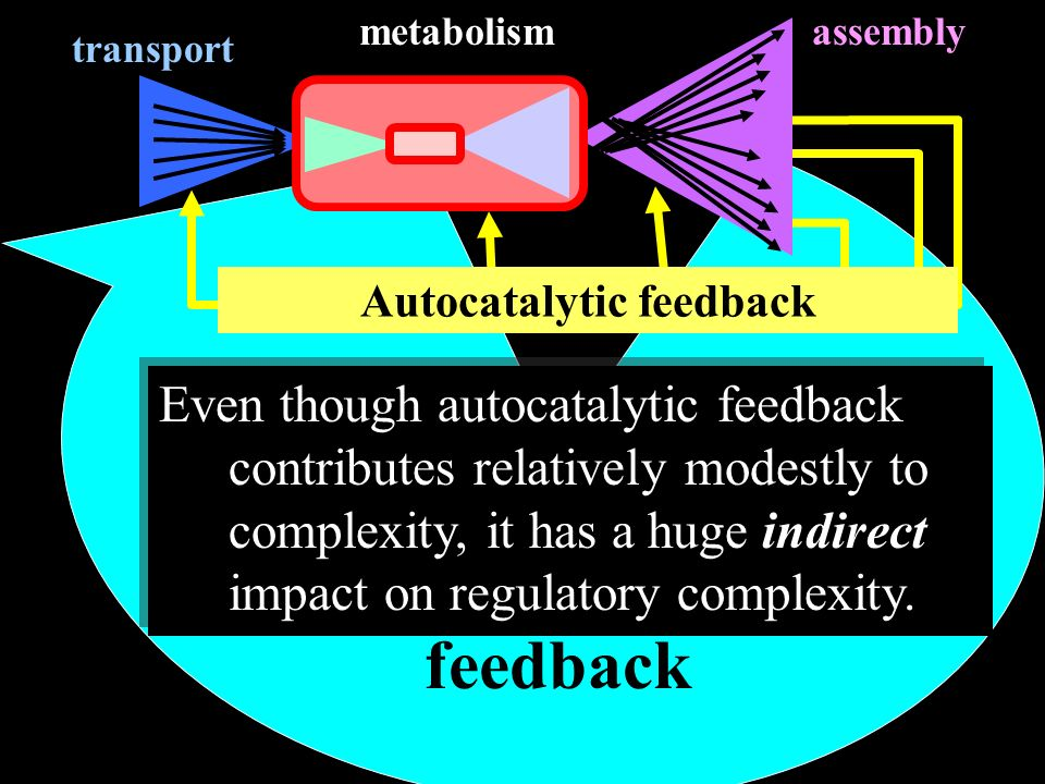 Autocatalytic feedback Regulatory feedback transport assemblymetabolism Even though autocatalytic feedback contributes relatively modestly to complexity, it has a huge indirect impact on regulatory complexity.