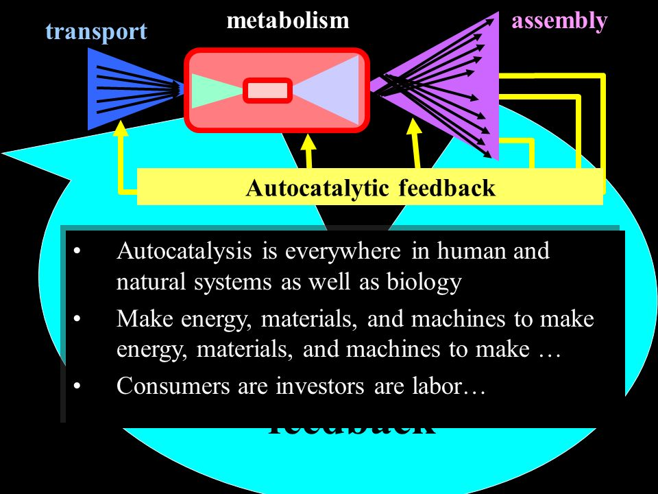 Autocatalytic feedback Regulatory feedback transport assemblymetabolism Autocatalysis is everywhere in human and natural systems as well as biology Make energy, materials, and machines to make energy, materials, and machines to make … Consumers are investors are labor… Autocatalysis is everywhere in human and natural systems as well as biology Make energy, materials, and machines to make energy, materials, and machines to make … Consumers are investors are labor…