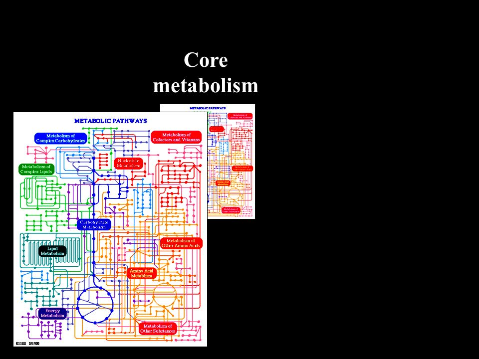 Core metabolism
