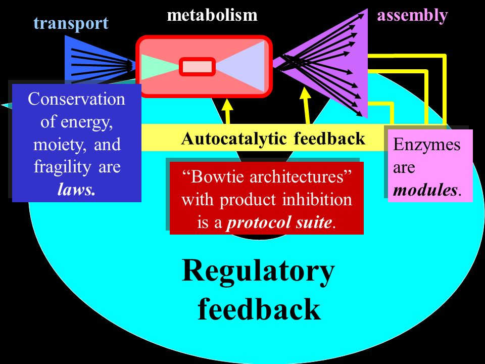 Autocatalytic feedback Regulatory feedback transport assemblymetabolism Enzymes are modules.