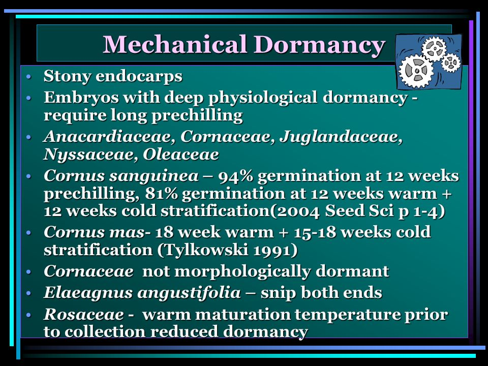 Mechanical Dormancy Stony endocarpsStony endocarps Embryos with deep physiological dormancy - require long prechillingEmbryos with deep physiological dormancy - require long prechilling Anacardiaceae, Cornaceae, Juglandaceae, Nyssaceae, OleaceaeAnacardiaceae, Cornaceae, Juglandaceae, Nyssaceae, Oleaceae Cornus sanguinea – 94% germination at 12 weeks prechilling, 81% germination at 12 weeks warm + 12 weeks cold stratification(2004 Seed Sci p 1-4)Cornus sanguinea – 94% germination at 12 weeks prechilling, 81% germination at 12 weeks warm + 12 weeks cold stratification(2004 Seed Sci p 1-4) Cornus mas- 18 week warm weeks cold stratification (Tylkowski 1991)Cornus mas- 18 week warm weeks cold stratification (Tylkowski 1991) Cornaceae not morphologically dormantCornaceae not morphologically dormant Elaeagnus angustifolia – snip both endsElaeagnus angustifolia – snip both ends Rosaceae - warm maturation temperature prior to collection reduced dormancyRosaceae - warm maturation temperature prior to collection reduced dormancy