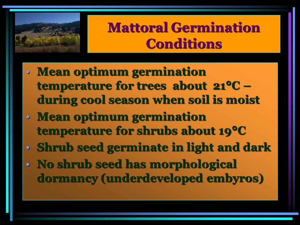 Mattoral Germination Conditions Mean optimum germination temperature for trees about 21°C – during cool season when soil is moistMean optimum germination temperature for trees about 21°C – during cool season when soil is moist Mean optimum germination temperature for shrubs about 19°CMean optimum germination temperature for shrubs about 19°C Shrub seed germinate in light and darkShrub seed germinate in light and dark No shrub seed has morphological dormancy (underdeveloped embyros)No shrub seed has morphological dormancy (underdeveloped embyros)