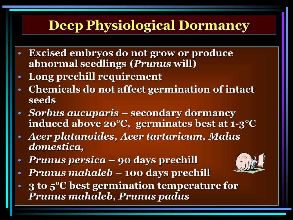 Deep Physiological Dormancy Excised embryos do not grow or produce abnormal seedlings (Prunus will)Excised embryos do not grow or produce abnormal seedlings (Prunus will) Long prechill requirementLong prechill requirement Chemicals do not affect germination of intact seedsChemicals do not affect germination of intact seeds Sorbus aucuparis – secondary dormancy induced above 20°C, germinates best at 1-3°CSorbus aucuparis – secondary dormancy induced above 20°C, germinates best at 1-3°C Acer platanoides, Acer tartaricum, Malus domestica,Acer platanoides, Acer tartaricum, Malus domestica, Prunus persica – 90 days prechillPrunus persica – 90 days prechill Prunus mahaleb – 100 days prechillPrunus mahaleb – 100 days prechill 3 to 5°C best germination temperature for Prunus mahaleb, Prunus padus3 to 5°C best germination temperature for Prunus mahaleb, Prunus padus