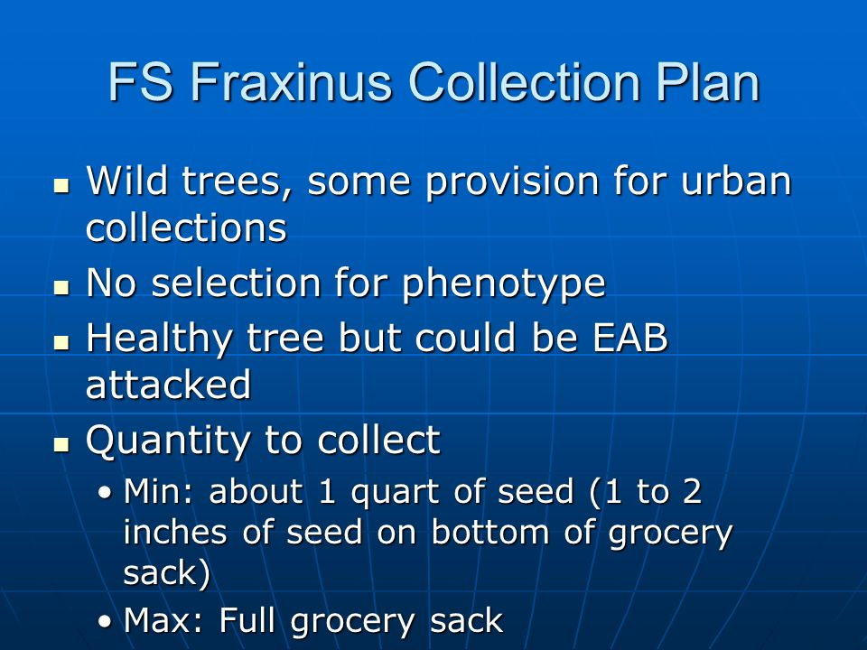 FS Fraxinus Collection Plan Wild trees, some provision for urban collections Wild trees, some provision for urban collections No selection for phenoty