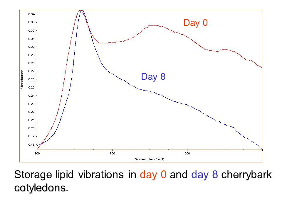 Storage lipid vibrations in day 0 and day 8 cherrybark cotyledons cotyledons. Day 0 Day 8