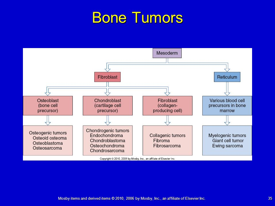 Mosby items and derived items © 2010, 2006 by Mosby, Inc., an affiliate of Elsevier Inc. 35 Bone Tumors