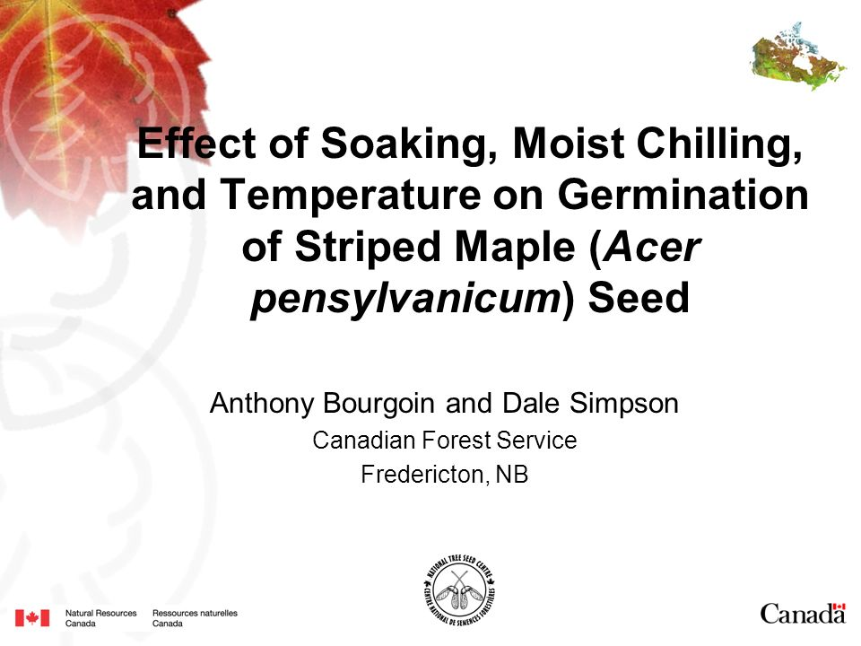 Effect of Soaking, Moist Chilling, and Temperature on Germination of Striped Maple (Acer pensylvanicum) Seed Anthony Bourgoin and Dale Simpson Canadian Forest Service Fredericton, NB